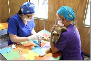 FOTO operativo veterinario 2