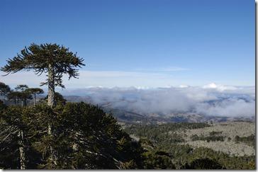 004 Parque Nacional Nahuelbuta